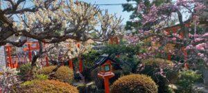成福院の庭の花々 コロナ禍でも春は来る♬